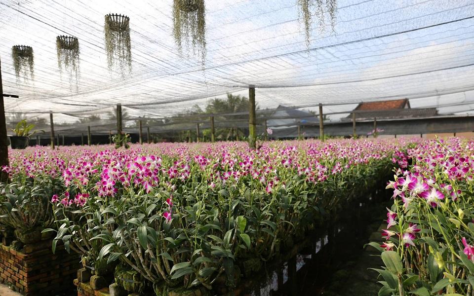 Khám phá khu du lịch Điền Lan Thôn Trang tại Tiền Giang
