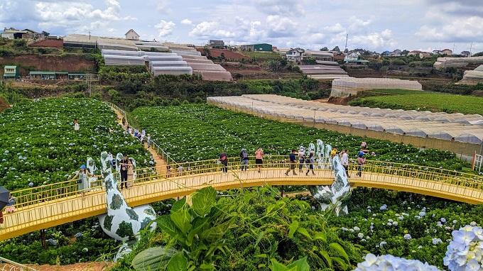Check-in cầu vàng Đà Lạt