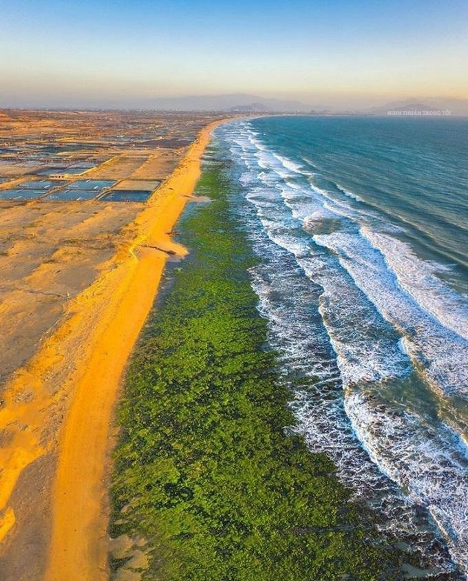 Cánh đồng rong biển chỉ xuất hiện lúc bình minh và hoàng hôn khi thủy triều xuống mức thấp nhất