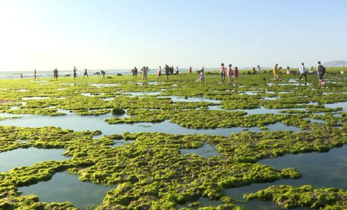 Du khách tham quan cánh đồng rong biển tại Ninh Thuận