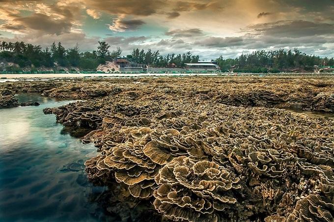 Ngắm nhìn vườn hoa san hô - Kỳ quan thiên nhiên trên đảo Hòn Yến