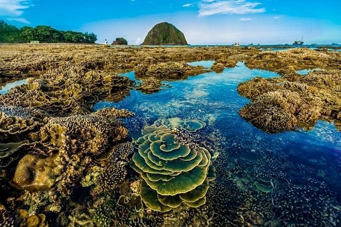 Những rặng san hô chìm dưới nước trông như những bông hoa của biển