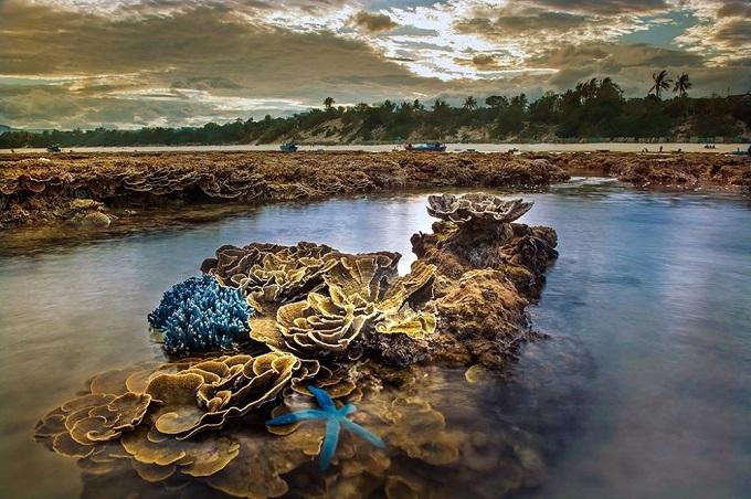 Thời gian đẹp nhất để ngắm san hô là vào cuối tháng 7