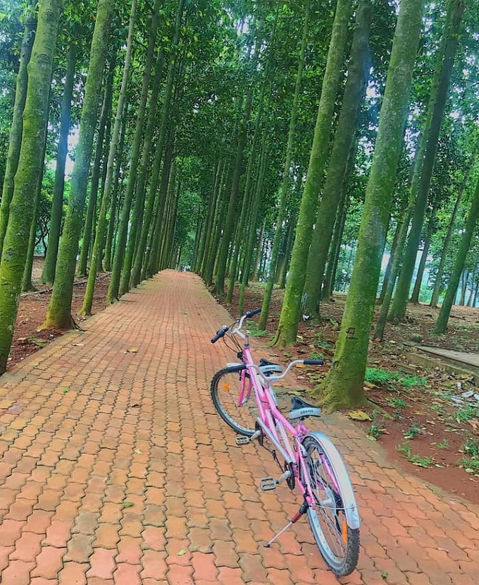 Trải nghiệm chạy xe đạp tham quan xung quanh khu du lịch