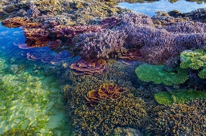 Vườn hoa này hiện có 17 loài san hô sinh sống và phát triển rất tốt