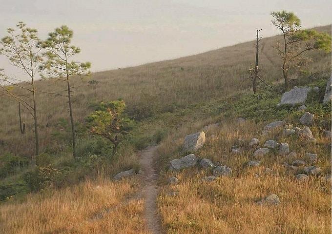 Đường mòn lên đỉnh Bình Hương đi qua những đồi cỏ cháy