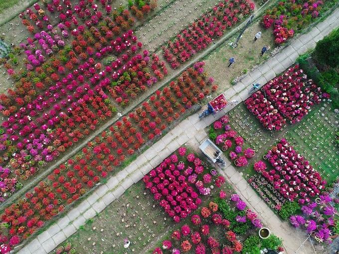 Hoa giấy Phú Sơn với đa dạng mẫu mã, màu sắc phục vụ thị hiếu khách hàng