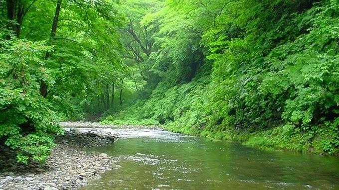 Khám phá Rừng nguyên sinh tại Phú Quốc