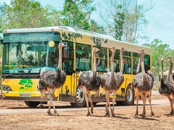 Khám phá Vườn Thú Safari Phú Quốc