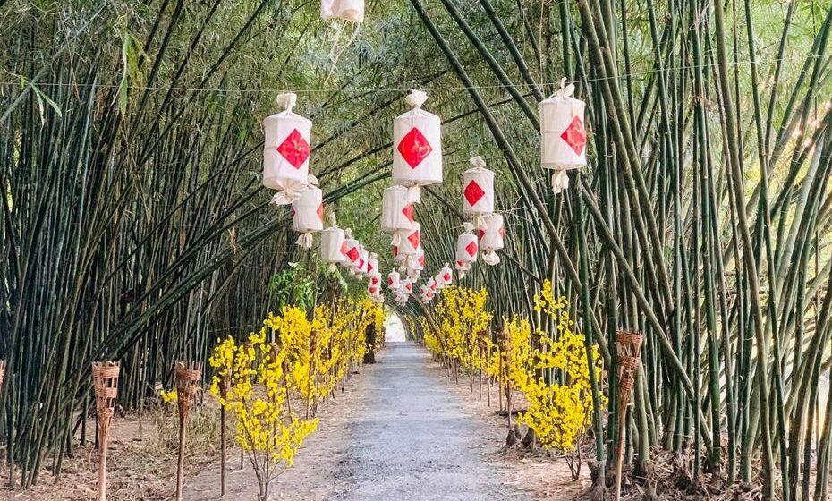 Khám phá con đường Tre tuyệt đẹp tại Hậu Giang - Bamboo Garden
