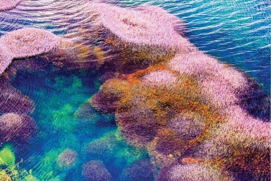 Khám phá hồ Tảo Hồng tuyệt đẹp tại Bảo Lộc