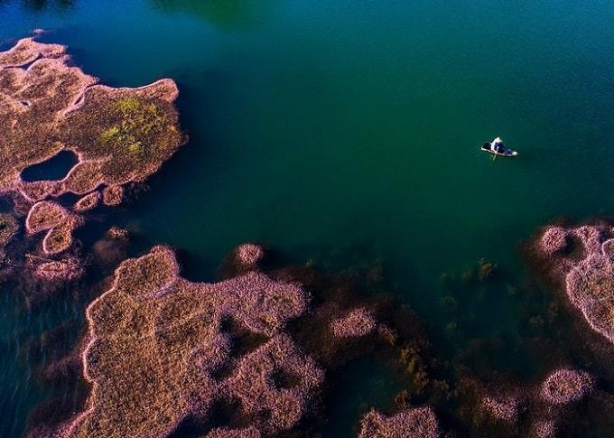Sắc hồng của tảo nổi bật giữa mặt hồ xanh trong, tạo nên một bức tranh thiên nhiên đẹp mê hồn ở Bảo Lộc