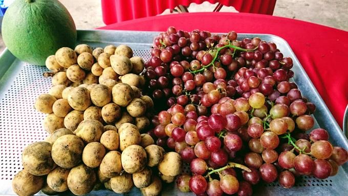 Buffet Trái cây hấp dẫn tại Vườn trái cây Bảo Thạch