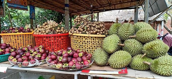 Ngoài tham quan, các bạn còn có thể mua trái cây mang về với giá tại vườn