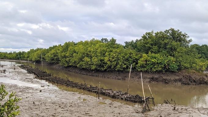 Tìm hiểu cách người dân nuôi hàu trên sông tại Bình Đại Bến Tre