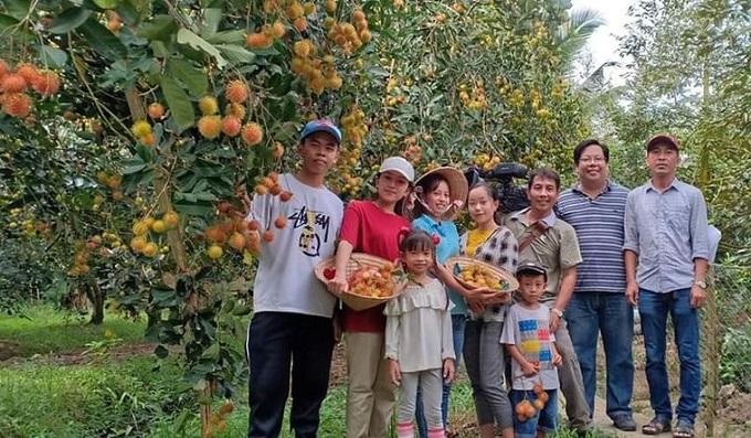 Tham quan vườn chôm chôm tại Châu Thành - Bến Tre