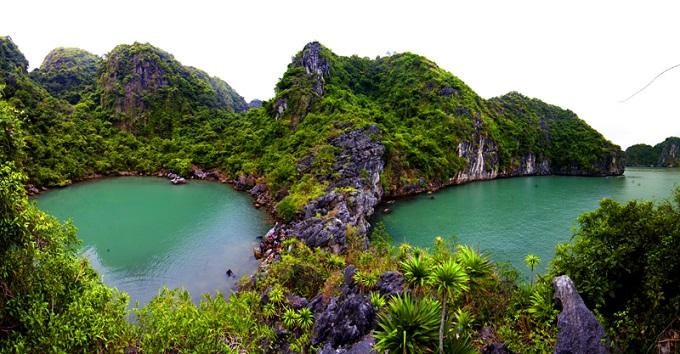 Phía sau khu hồ Ba Hầm còn là nơi tập trung nhiều tùng áng tuyệt đẹp, lưu giữ nhiều nguồn gen quý hiếm.