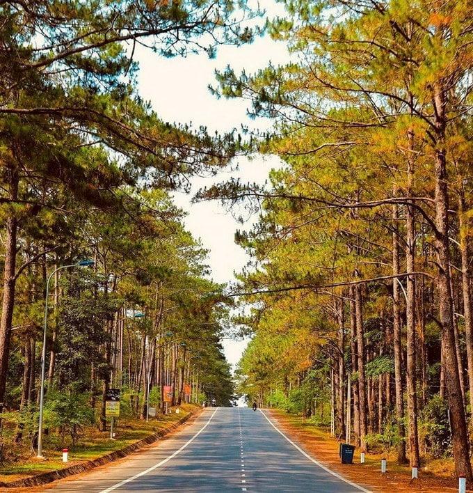 Rừng thông Măng Đen Kon Tum - vẻ đẹp đậm chất núi rừng Tây Nguyên