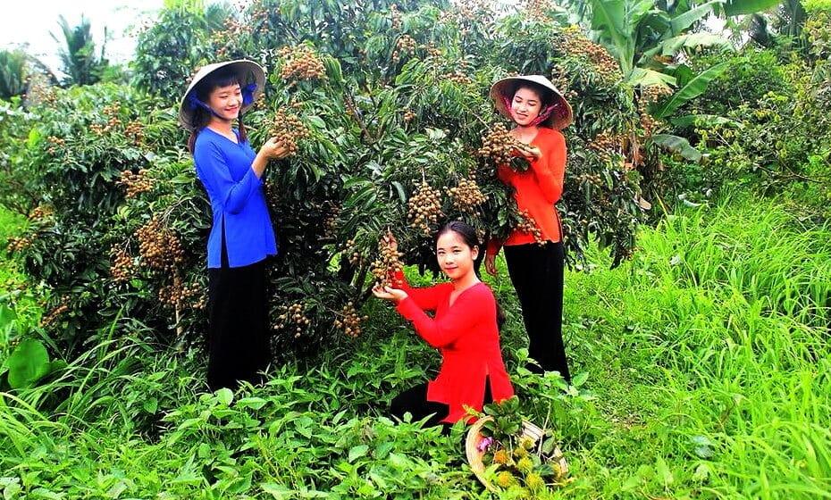 Vườn trái cây Cần Thơ - Top những điểm đến hấp dẫn, an toàn trong mùa dịch 2021