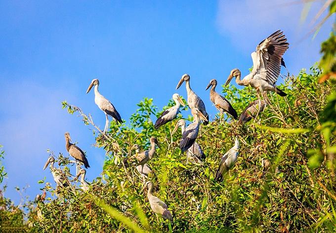 Khu bảo tồn thiên nhiên Lung Ngọc Hoàng có hệ sinh thái phong phú với nhiều loài động thực vật quý hiếm