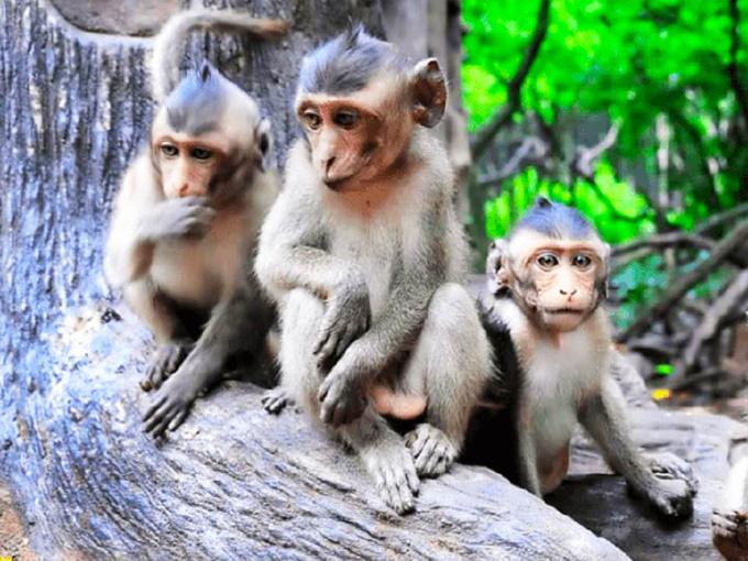 """Khám phá Vẻ đẹp """"Đảo khỉ"""", rừng nguyên sinh ngập mặn Cần Giờ"""