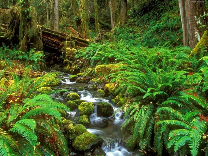 Vườn quốc gia Phú Quốc – khu dự trữ sinh quyển của thế giới