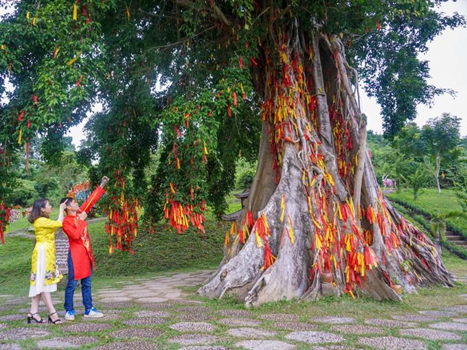 Cây mộc thần linh thiên ở Thác Yang Bay